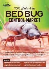 Large photo of a bed bug